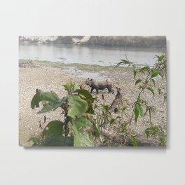 Wild Rhino - Chitwan National Park, Nepal Metal Print