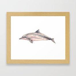 Tucuxi (Sotalia fluviatilis) Framed Art Print