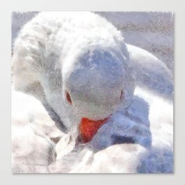 White Preening Duck - Feather and Down Close Up Canvas Print
