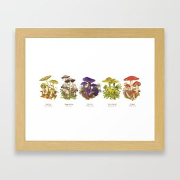 Illustrated Mushrooms Framed Art Print