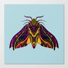 Elephant Hawk Moth Canvas Print
