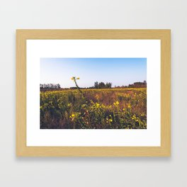 Uncultivated field in the Lomellina countryside at sunset full of yellow flowers Framed Art Print