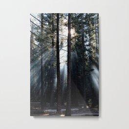 Peaking Through the Tree Metal Print