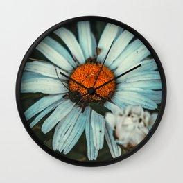 Shaded Daisy II. Nature Photography Wall Clock