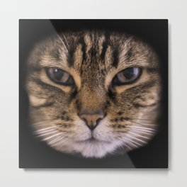 Enter the Catface Metal Print