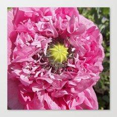 pink poppy macro XII Canvas Print