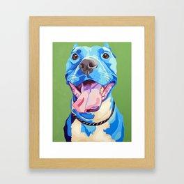 Ziggy the Pit Bull Terrier Framed Art Print