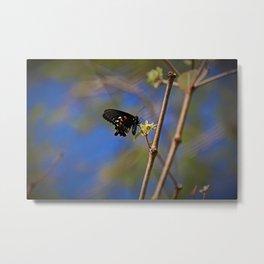 Spicebush Swallowtail I Metal Print