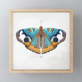 calm: buckeye butterfly Framed Mini Art Print