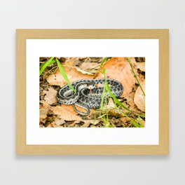 Hiss Framed Art Print