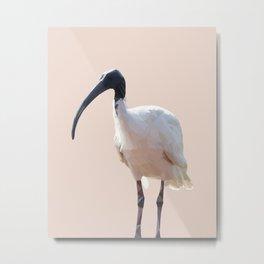 Poly Australian White Ibis Metal Print