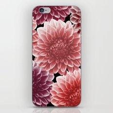 DAHLIAS (flowers collection) iPhone & iPod Skin