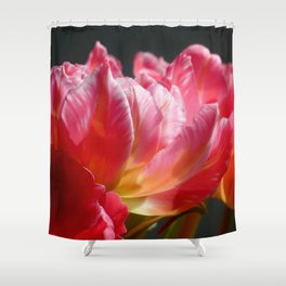 Pink and Red Parrot Tulips close up IV Shower Curtain