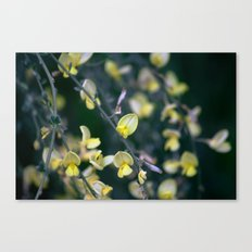 Yellow Blur Canvas Print