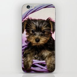 Yorkshire Terrier Puppy Sitting in a Purple Basket with Purple Floral Decorations and a Pink Backgro iPhone Skin