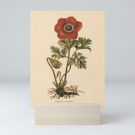 1800s Encyclopedia Lithograph of Anemone Flower Mini Art Print