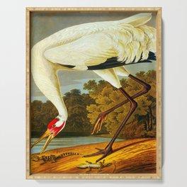 Hooping Crane John James Audubon Birds Of America Scientific Illustration Serving Tray