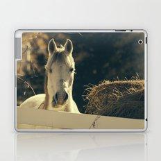 Autumn Mare Laptop & iPad Skin