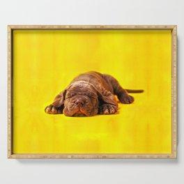 Cane Corso - Italian Mastiff Puppy Serving Tray