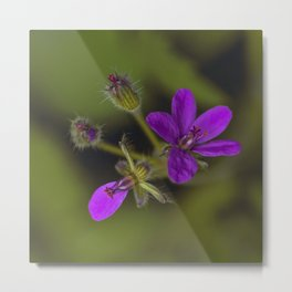 Wid Purple Metal Print