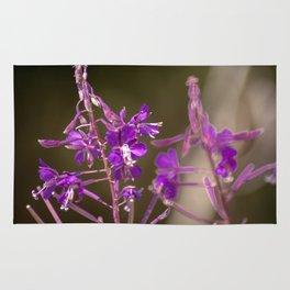 Concept flora : Lythracaee Rug