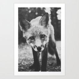 FOXY II / Alaska Art Print