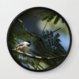 Roosting Black Capped Chickadee Wall Clock