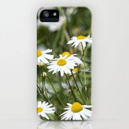 chamomile flowers iPhone Case