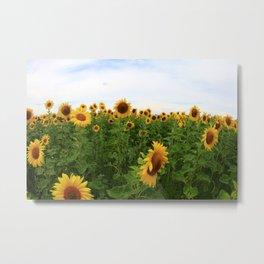 Sonnenblumen 5 Metal Print