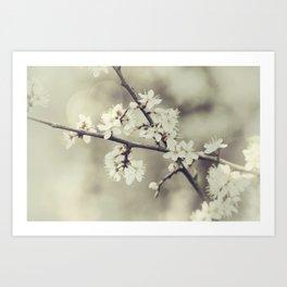 crossed blossoms Art Print