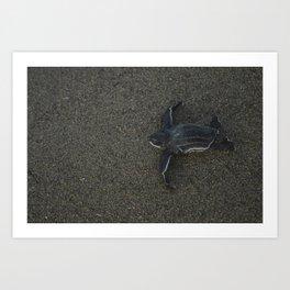 Leatherback Turtle Baby Art Print
