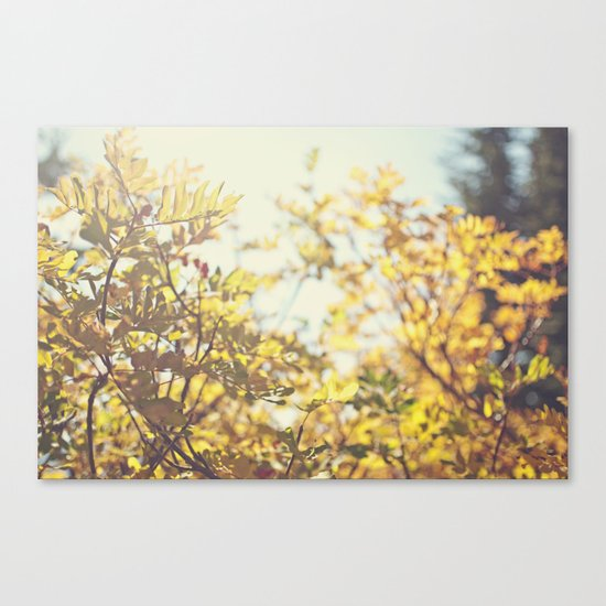 Fading Fall Leaves Canvas Print