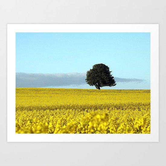 Fife's Golden Fields Of Rapeseed. Art Print