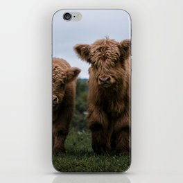 Scottish Highland Cattle Calves - Babies playing II iPhone Skin