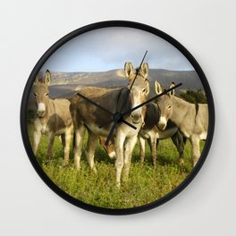 donkey band, donkey, photo, nature, perverse, band, field, lanscape Wall Clock