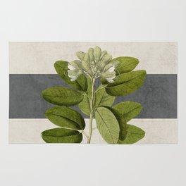 botanical stripes 5 -gray Rug