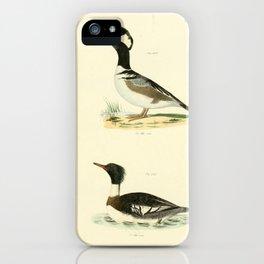 120 Hooded Sheldrake (Mergus cucullatus) Red breasted Sheldrake (Merganser serrator)13 iPhone Case