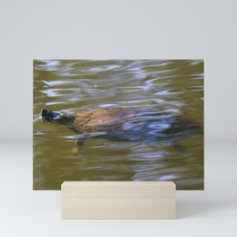 turtle swimming at Trojan pond, near Goble, Oregon 2 Mini Art Print
