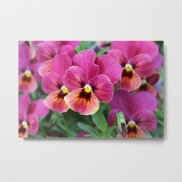 Italian Garden - Pink Pansy Flower Metal Print
