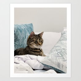 Tabby among pillows Art Print