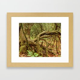 Dancing trees in the cloud forest  -  Tradewinds trail El Yunque rainforest PR Framed Art Print