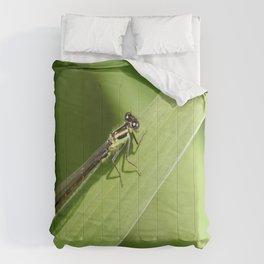 bugging around Comforters