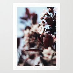 Soft Blossoms Art Print