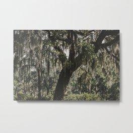 Savannah Spanish Moss Metal Print