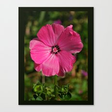 Bliss Pink Canvas Print