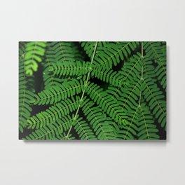 Green Ferns Metal Print