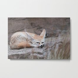 Fennec Fox Sleeping Metal Print