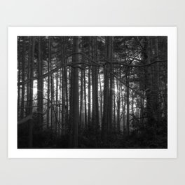The magic of the woods Art Print