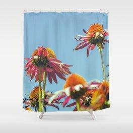 Coneflowers Reaching Skyward Shower Curtain