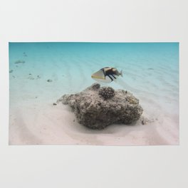 Tropical Maldives White Sand Lagoon Coral Fish Rug